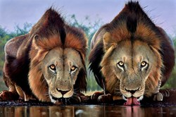 The Lion's Share by Pip McGarry - Original Painting on Stretched Canvas sized 60x40 inches. Available from Whitewall Galleries